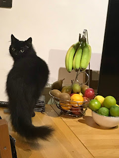 A black cat stands next to a fruit bowl full of bananas, pears, apples, oranges and kiwis.