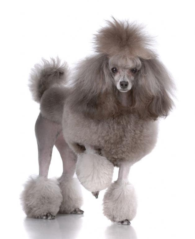 Top 10 Dog Breeds Annie Many