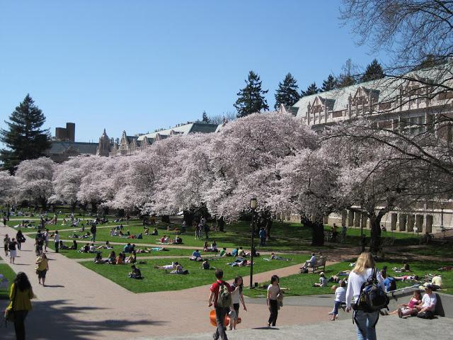 Tại trường Đại học Washington, mùa Xuân là thời gian khuôn viên của trường bừng sáng lên nhờ những hàng cây anh đào. Những cây anh đào này là món quà từ Nhật Bản gửi đến Seattle vào năm 1912. Sau đó, trường đã nhận thêm 31 cây được cấy ghép từ Vườn ươm Washington Park vào những năm 60. Các cây hoa của trường giờ đây nổi tiếng đến mức chúng thậm chí còn có cả tài khoản Twitter riêng.