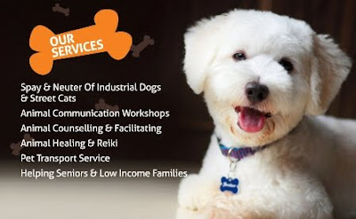 Animal Communication Singapore