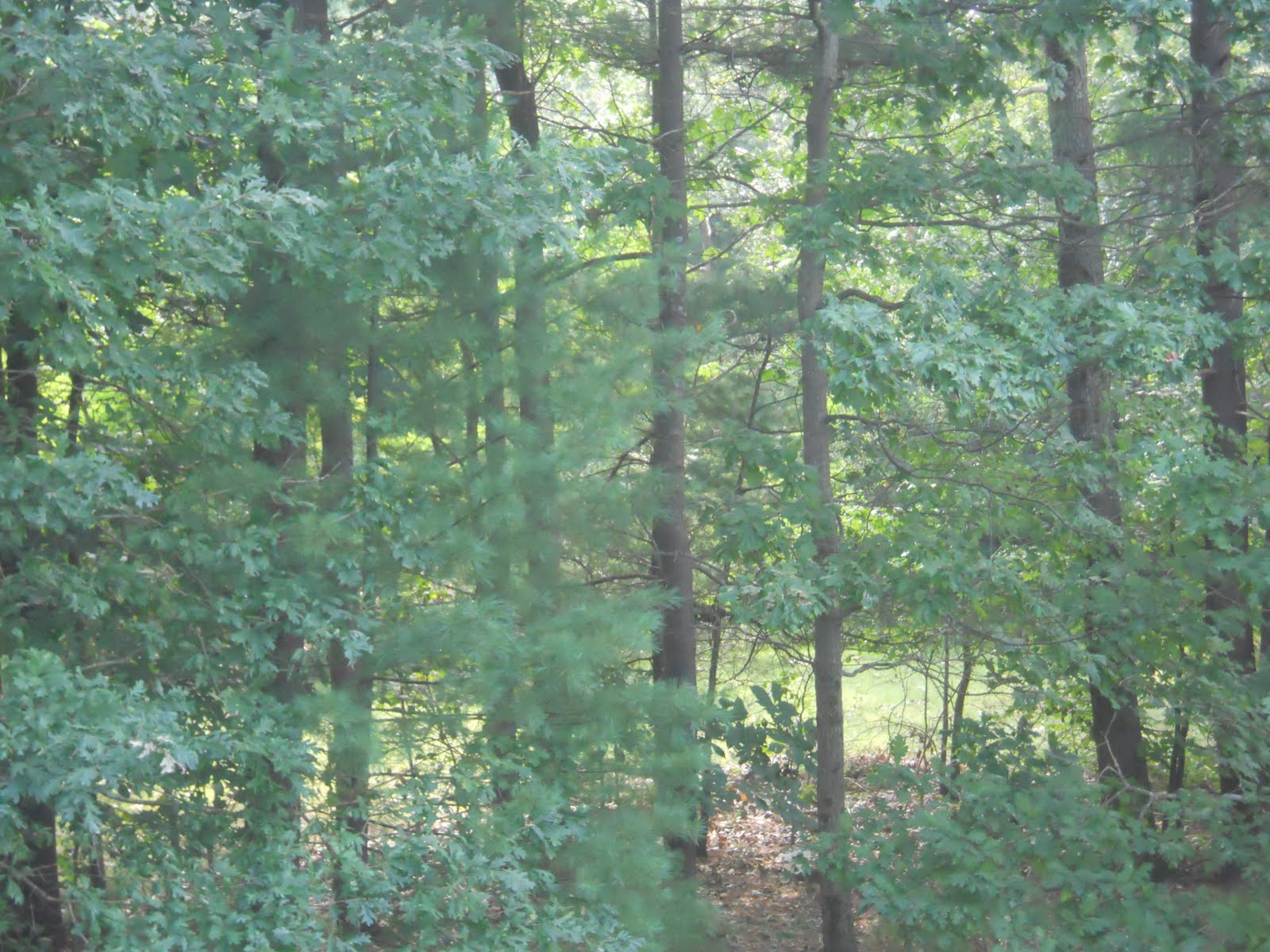 what are the four different forest biomes