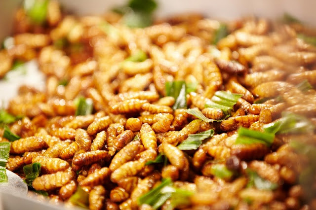 The Food from Insects Makes Many People Fascinated 2
