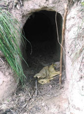 Cross-border tunnel found in Chopra north dinajpur