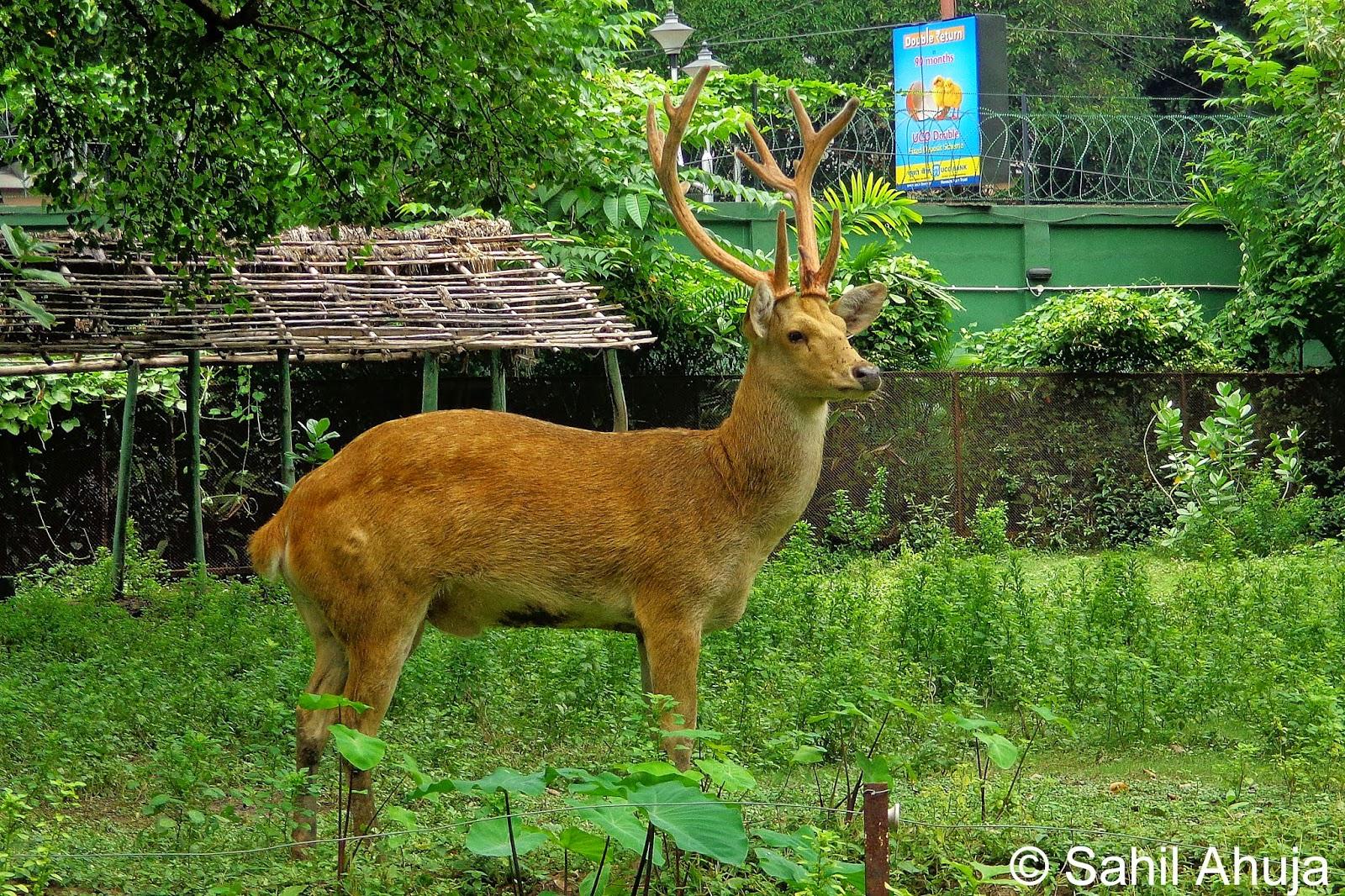 A visit to the zoo kolkata s alipur zoo