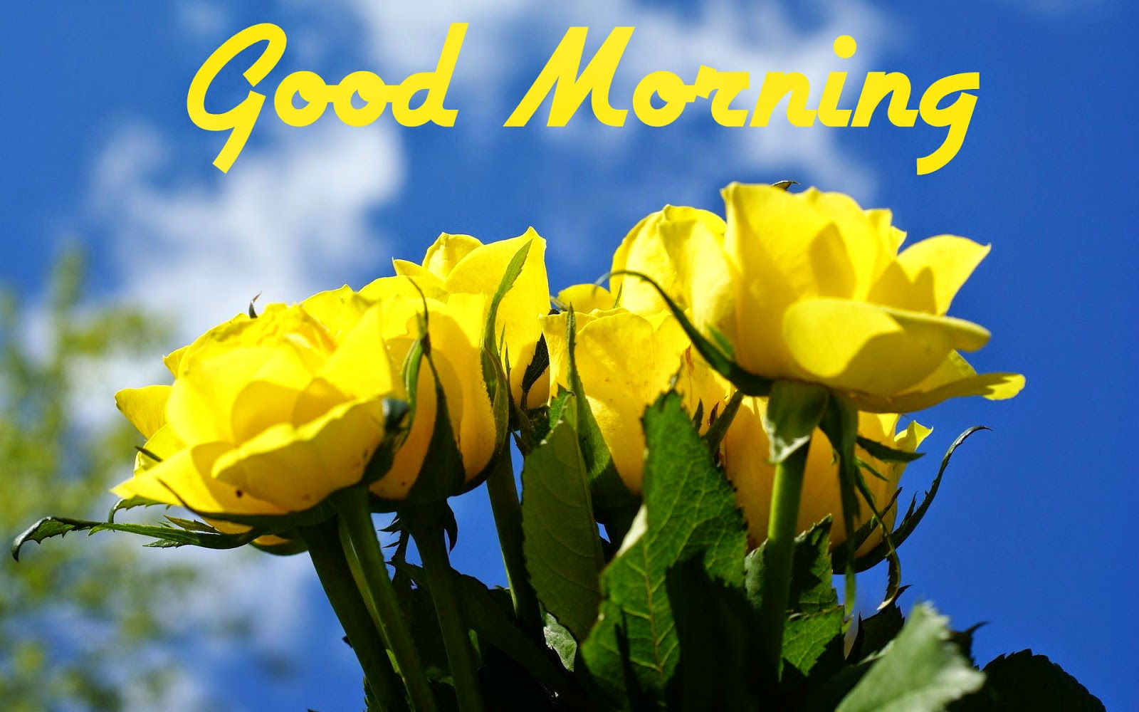 Boy And Girl Kissing Hd Wallpapers Best Yellow Flowers Hd Photo S For Good Morning Festival
