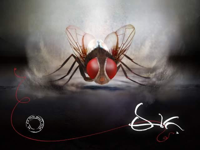 Makkhi 2012 Movie Hd Wallpapers And Review: Makki (Eega) Movie Review