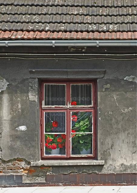 kwiaty w starym domu