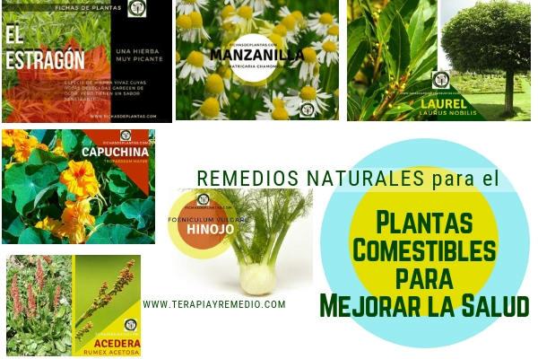 6 plantas comestibles fuente de salud en casa y nos nutren y fortalecen