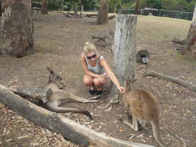 where to see kangaroos australia