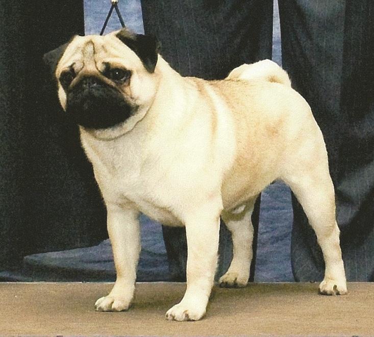 DOG SHOW POOP: 2011-10-16