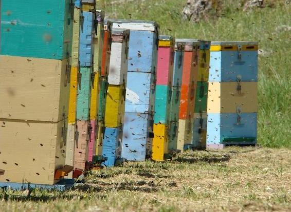 Πως θα ζήσει ολόκληρη οικογένεια από τη μελισσοκομία: Αυτά που δεν σας έχει πει κανείς...