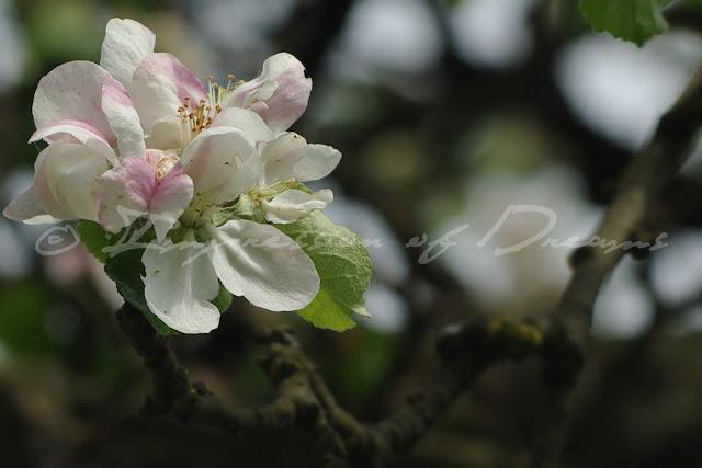 Spring Impressions #19