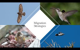 September 1 Program: Migration Strategies