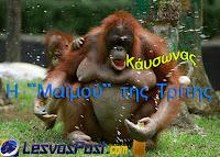Η «Μαϊμού» του αθλητισμού της Λέσβου όπως κάθε Τρίτη έτσι και σήμερα αποκαλύπτει πολλά