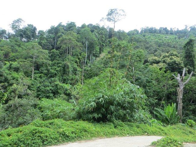 Деревья в Таиланде