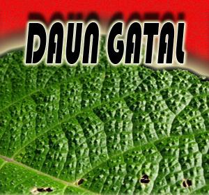 'Daun Gatal' Rahasia Alami Dari Papua Untuk Hilangkan Pegal