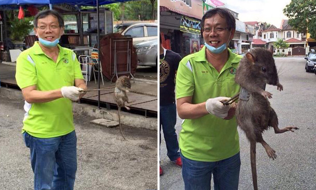 Netizens have posted a photo showing the actual size of the 'giant rat' that piqued the interest of Facebook users earlier