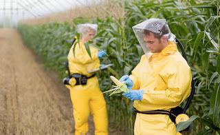Monsanto's Roundup Weed Killer