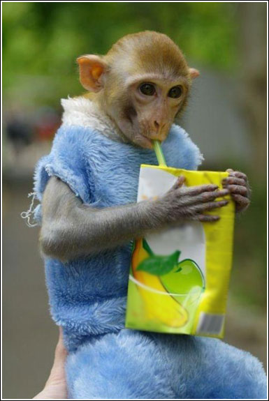 funny monkeys photos | Sri lanka Funny images Sinhala ...