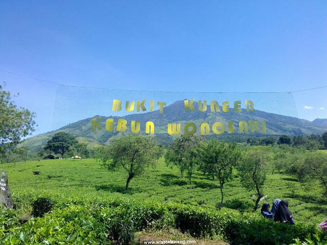 bukit kuneer kebun teh wonosari