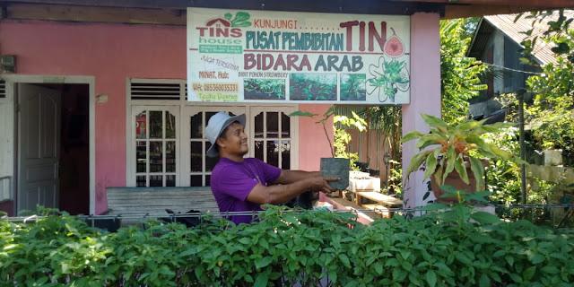 Budidaya Pohon Tin Dongkrak Investasi Halal Aceh