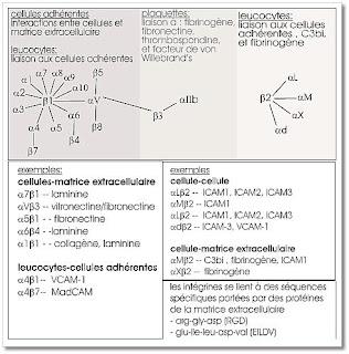 Reticulo endoplasmatico funcion yahoo dating