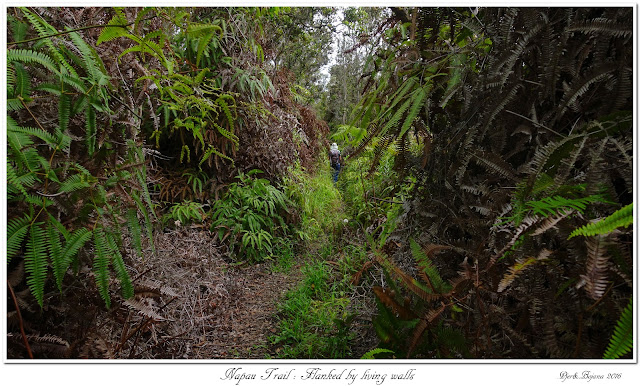 Napau Trail: Flanked by living walls