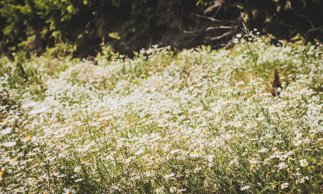 kukkapelto