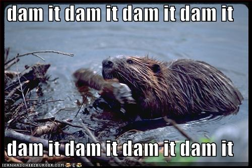 Funny beaver pictures gallery - ONLINE NEWS ICON