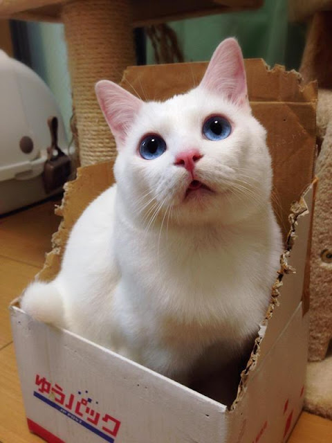 Chú mèo đáng yêu với khuôn mặt... say xỉn