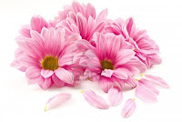 http://4.bp.blogspot.com/-b01NVv-_DWI/UiVMh3ydHYI/AAAAAAAAN-M/kvgbCu4WF6U/s1600/10992896-blooming-beautiful-pink-flower-isolated-on-white-background.jpg