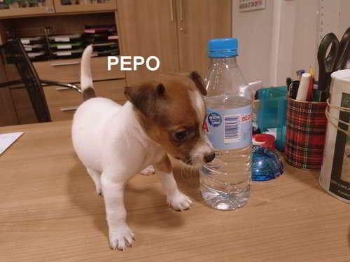 cachorro talla pequena mediana