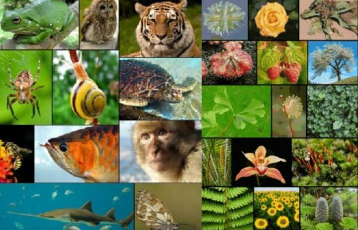Ekosistem terbentuk dari makhluk hidup yang terdiri dari tanaman  Pelestarian Ekosistem Dan Makhluk Hidup