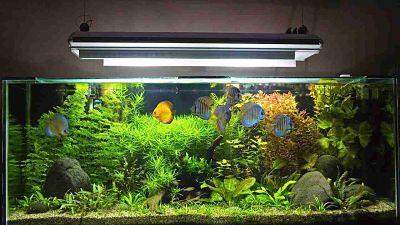 Tips Memelihara Ikan Dalam Akuarium