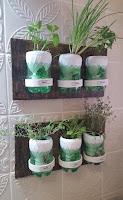 plantar hierbas aromaticas en botellas