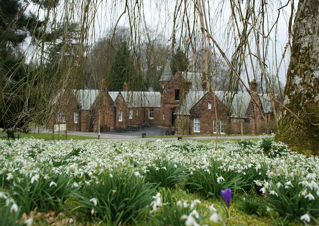 Snowdrops at Threave Gardens