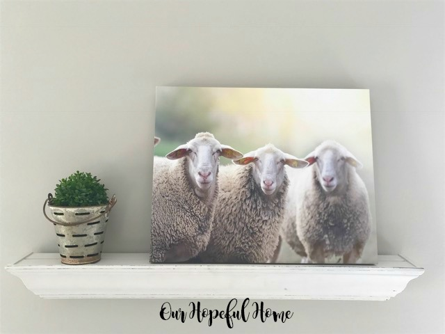 sheep canvas olive bucket boxwood ball