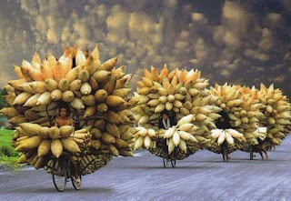 Fotografia em perspectiva numa estrada sem pavimento em uma zona rural. Três agricultores andam de bicicleta, enfileirados e, o último, caminha ao lado da bicicleta; todos quase ocultos ao centro da carga descomunal que transportam: Cestos fechados em formato cônico com aparência de enormes espigas de milho ainda envoltas na palha estão dispostos à frente do guidão e sustentados ao redor da bicicleta, amarrados harmoniosamente de maneira circular com as pontas para fora. Na parte de trás e abaixo, de cada feixe de cestos, rente à roda traseira, dezenas de bobinas (de palha) enroladas e presas por cintas finalizam o formato arredondado da inusitada carga. O céu é escuro e as nuvens aglomeram-se em forma de chumaços de algodão.