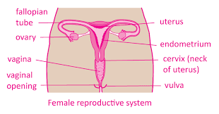 पीरियड्स क्या होते है , what is periods in females