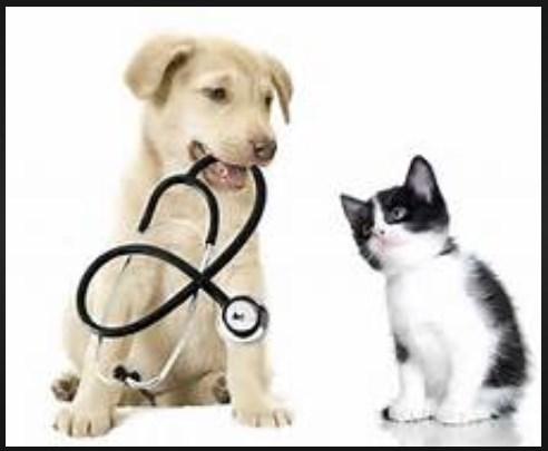 http://www.animalc4re.com/2017/09/cat-and-dog-vet.html