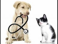 Cat And Dog Vet