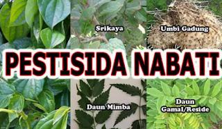 Penggunaan Pstisida alami pada ketika ini sudah mulai di tinggalkan oleh Para petani Kabar Terbaru- PESTISIDA ALAMI BERBAHAN NABATI