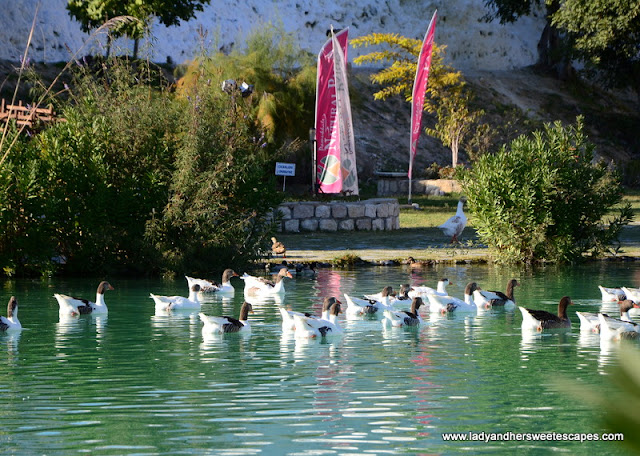 ducks at Pamukkale Natural Park