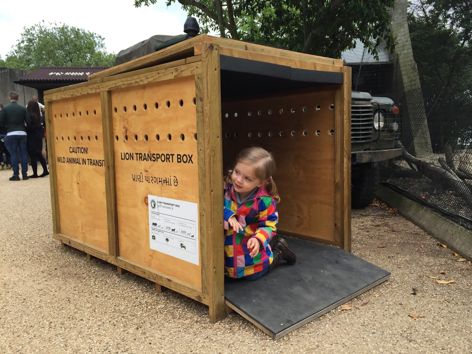 girl in a lion transportation box
