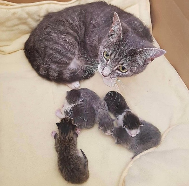 20 Adorable Pictures Of Proud Animal Parents