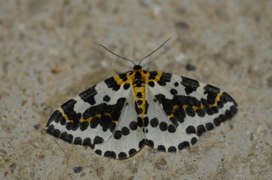 Me llamo lukas con k el blog de un joven naturalista - Acabar con las polillas ...