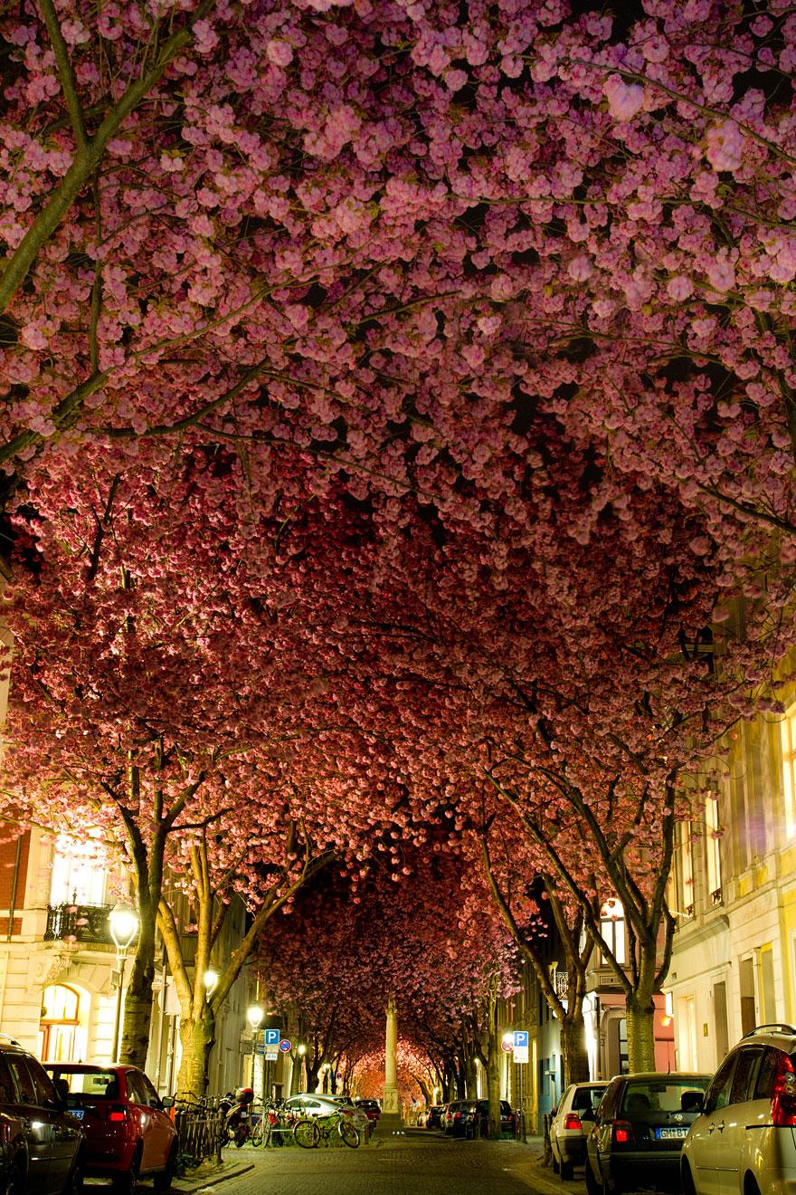 Germany,Street in Bonn