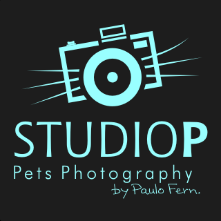Studio P - Pets Photography