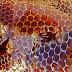 Le miel de manuka : Bienfaits santé et caractéristiques