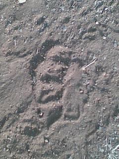 Madhumakarandgad12